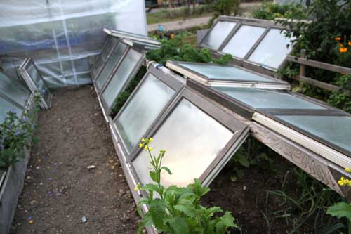 This cold frame is made out of recycled windows, which provide greater insulation than plastic. Photo by Heidi Rader